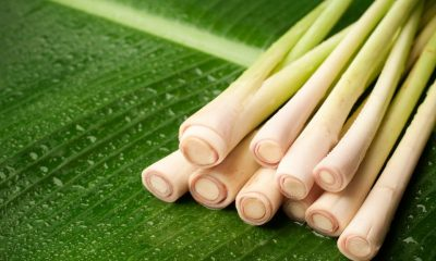 How Is Lemongrass Used To Treat Toenail Fungus? – Toenails